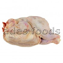 Fresh Whole Big Hard Boiler Chicken Per Kg
